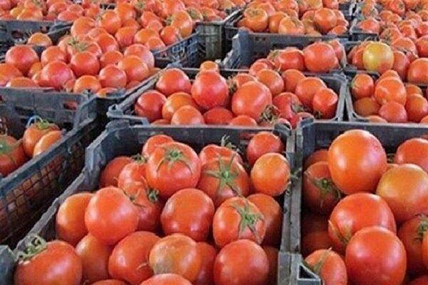 گوجه فرنگی ، قیمت ش در بازار شکسته شد / کاهش مجدد قیمت گوجه فرنگی