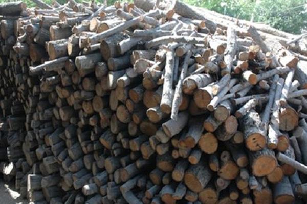 کشف چوب قاچاق از انبار دامداری در دولت آباد