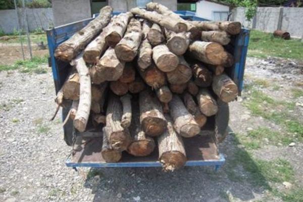 توقیف ۱۶۵ کیلوگرم ذغال بلوط و تاغ قاچاق در شهرستان برخوار