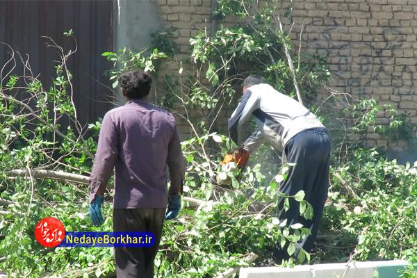 ماجرای بریدن درختان سرسبز در دولت آباد چیست؟